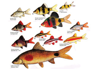 Asiatische Aquarien Sri Lanka
